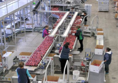 Packing apples on the state of the art packing facility run on air supplied by Sullair compressors systems.